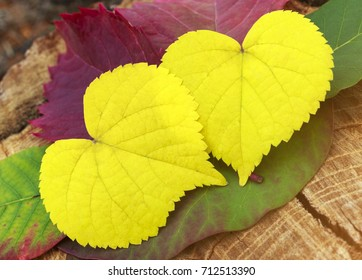 two leaves in the shape of a heart