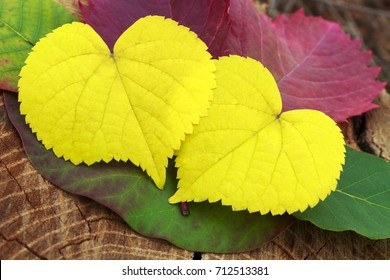 two leaves in the shape of a heart, close up