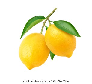 Two Lemon fruits hanging with branch and leaves isolated on white background. Clipping path. - Shutterstock ID 1935367486