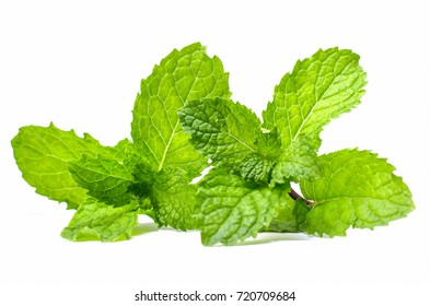 two limb Bunch Green Mint leaf green plants isolated on white background peppermint aromatic properties strong teeth ivy as a ground cover types of Fresh raw green organic