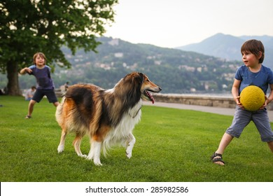 Two little boys playing with a collie dog with the ball in the park