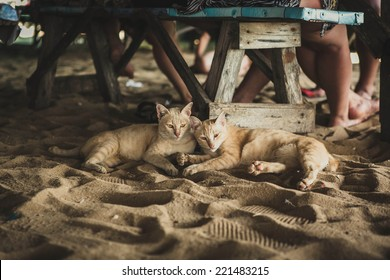 Two little cats laying on the sandy beach under the bench