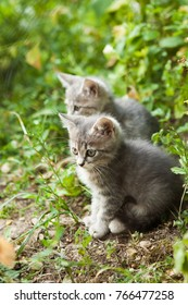 Two little cute cats
