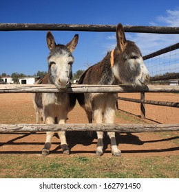 two little donkeys at  ranch