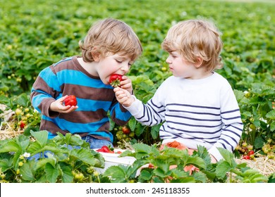 Two little friends having fun on strawberry farm in summer. Feeding each other with organic berries and spending time together. Cute blond brother boys eating healthy berries.