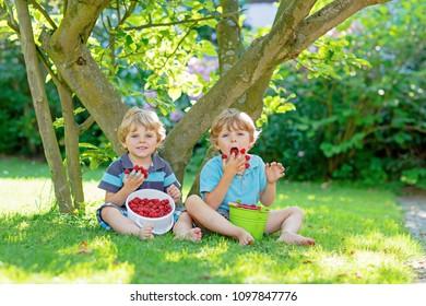 Two little friends, kid boys having fun on raspberry farm in summer