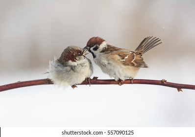 two little funny birds sitting on a branch in the Park