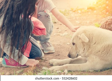 Two little girl stroking a big white lying dog, sunny