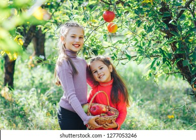 two little girls pick apples in the autumn garden