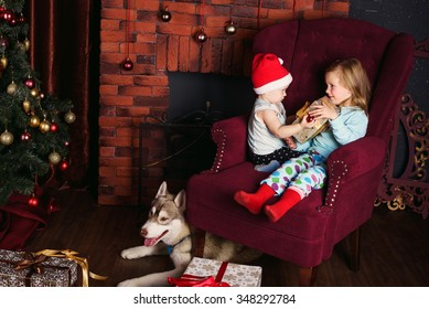 two little girls and siberian husky dog playing with presents in christmas decorations