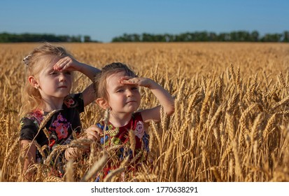 Two little girls stand in a spikelet field, hands put to their forehead and look into the distance. Spikelet field. Children walk around the field.