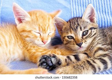 Two little kittens sleeping