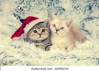 Two little kittens wearing Santa hat lying on fluffy blanket