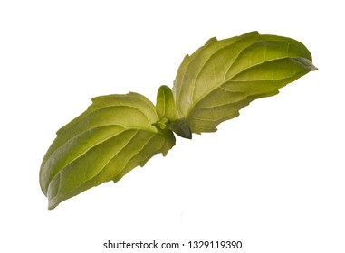 two little leaves of basi isolated on white