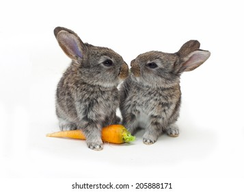 two little Rabbits with carrot on white background