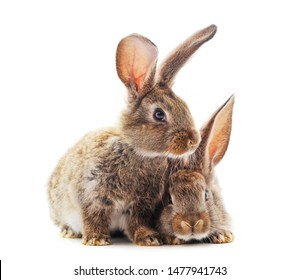 Two little rabbits isolated on a white background.