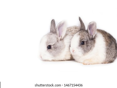 Two little rabbits sitting in front of white background