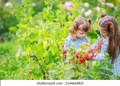 Two little sisters in the garden, eating red currant from the bush, country summer, sunny day, healthy vitamin food