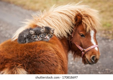 Two little tabby kittens sitting on the pony's back