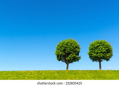 Two lonely trees on a green meadow against clear blue sky. Nice minimalist view of rounded trees on a hill on sunny summer day. Simple landscape with trimmed trees and copy space for background.