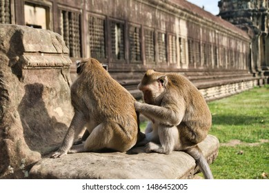 two lousing monkey couple in angkor wat in cambodia