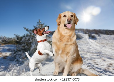 Two lovely dogs in the snow. Pets in the winter background.