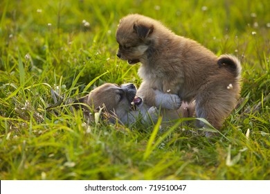 Two lovely puppy playing outdoor