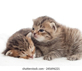 Two lovely tabby kitten