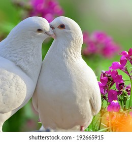two loving white doves and beautiful purple flowers