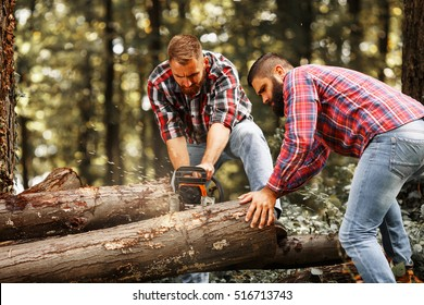 Two Lumberjacks sawing wood trunk with big chainsaw.