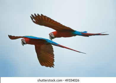 two macaws flying in the sky