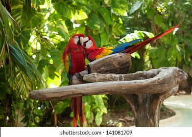 two macaws hugging and cuddling