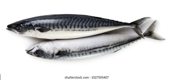 Two mackerel fish isolated on white background