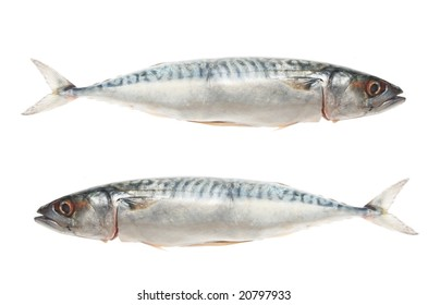 Two mackerel fish isolated on white