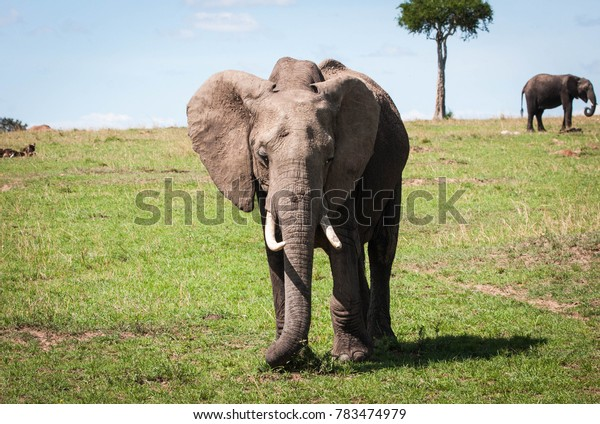 Two majestic elephants and a tree on a hill in the Maasai Mara reserve in Kenya