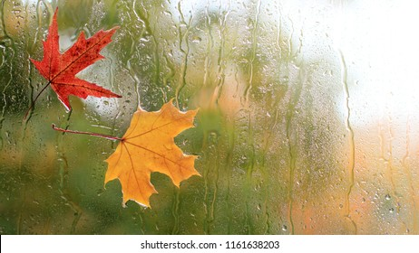 two maple leaves glued to the window on the reverse side during the rain / autumn weather