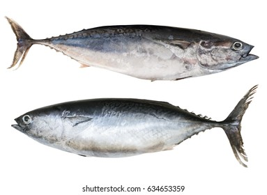 Two Mediterranean horse mackerel isolated on white background.Trachurus mediterraneus