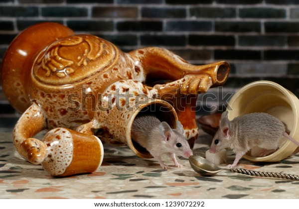 Two Mice On Countertop Kitchen On | Animals/Wildlife ...
