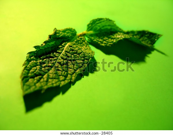 Two mint leaves on a vibrant green background.