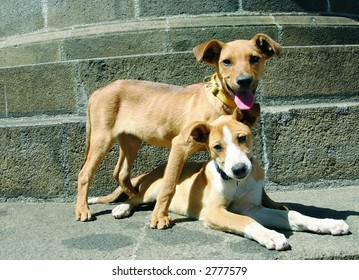Two mixed breed dogs one down one up