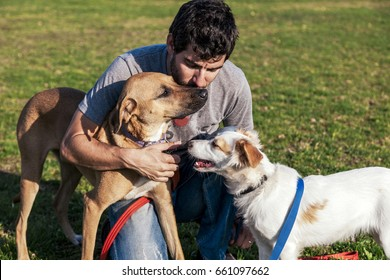 Two mixed breed dogs and their trainer on the lawn at a park. The dogs are fight-playing.
