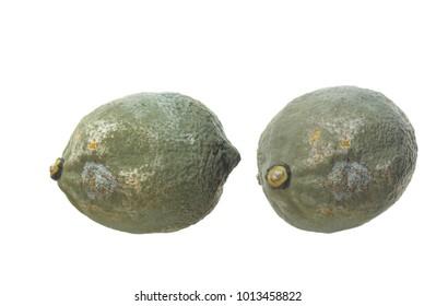 two moldy lemon on white background