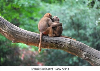 Two monkey friends on tree