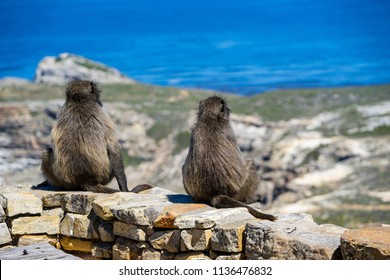 two monkey sitting at top of the rock