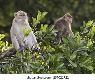Two monkeys in the jungle