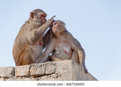 two monkeys on roof of building, India
