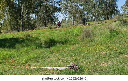 two mountain bikers riding uphill through wildflowers and trees in the western negev in israel