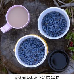 Bilberry Tea Images, Stock Photos & Vectors | Shutterstock