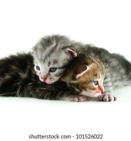 Two newborn kitten isolated on white background