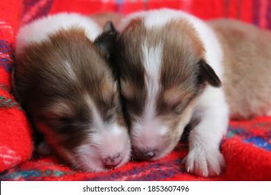 Two newborn puppies cuddling together